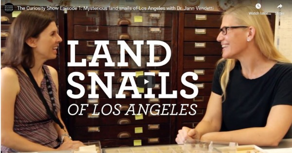Mysterious land snails of Los Angeles with Dr. Jann Vendetti