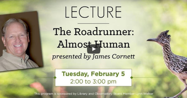 Read more about the article The Roadrunner – Almost Human