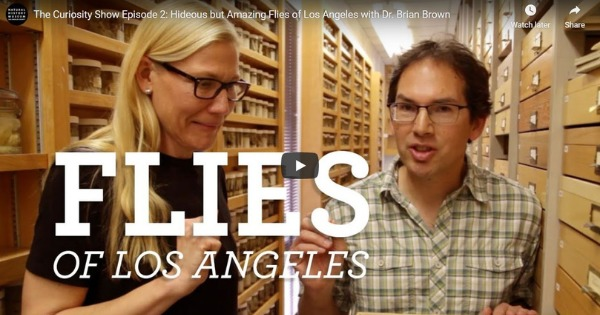 Hideous but Amazing Flies of Los Angeles with Dr. Brian Brown
