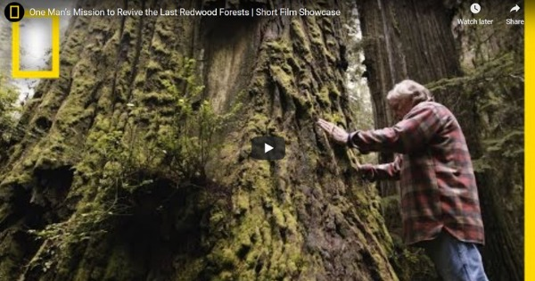 Read more about the article One Man's Mission to Revive the Last Redwood Forests   Short Film Showcase
