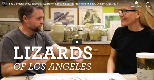 Lizards of Los Angeles: The Native and the New With Dr. Greg Pauly