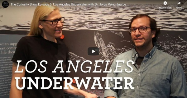 Read more about the article Los Angeles Underwater, with Dr. Jorge Velez-Juarbe