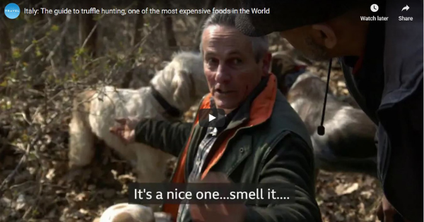 Italy: The Guide to Truffle Hunting