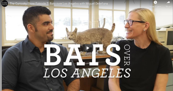 Read more about the article Bats over Los Angeles with Miguel Ordeñana
