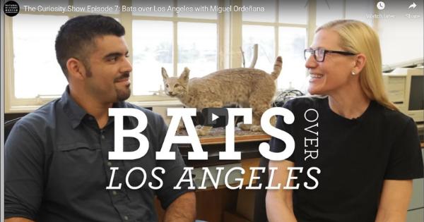 Bats over Los Angeles with Miguel Ordeñana