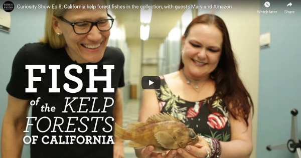 Read more about the article California Kelp Forest Fishes With Guests Mary and Amazon