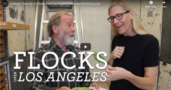Read more about the article The Curiosity Show Episode 9: Flocks Over Los Angeles