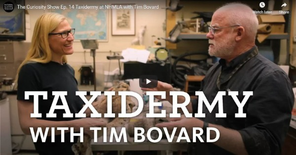 The Curiosity Show Ep. 14 Taxidermy at NHMLA with Tim Bovard