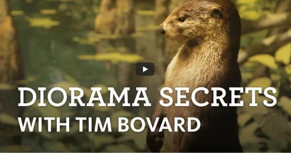The Curiosity Show Ep. 15 Diorama Secrets With Tim Bovard