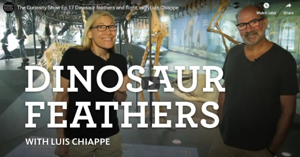 Read more about the article The Curiosity Show Ep.17 Dinosaur Feathers and Flight