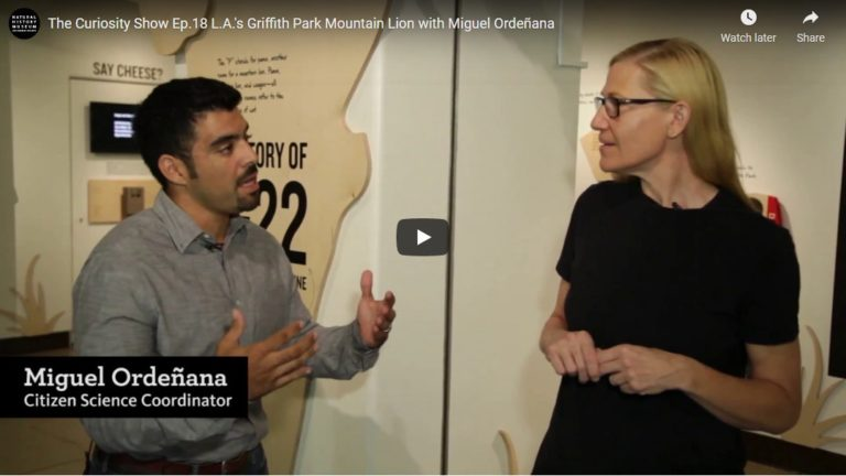 Read more about the article The Curiosity Show Ep.18 L.A.'s Griffith Park Mountain Lion